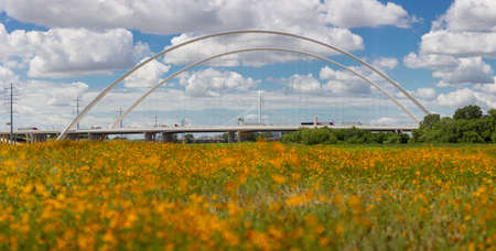This is the picture of Margaret McDermott Bridge and Wildflowers in Dallas Texas