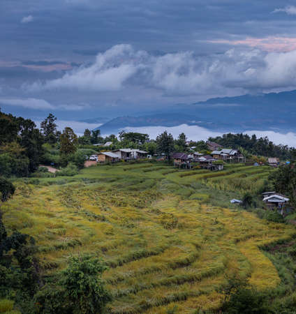 This is the photo of of yellow rice field with huts in asia from Chiang Mai, Thailand