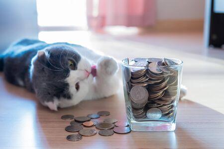 Coins in money jar saving money concept with scottish fold cat background Archivio Fotografico