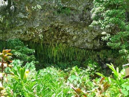 Shows a Grotto in Hawaii