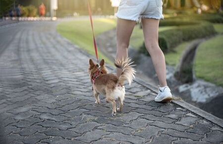 Baby dog walking  exercise with owners for health  concept,  in the evening on the park background, sunset, - image 免版税图像