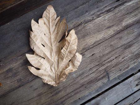 dried leaf: dried leaf on the old wood floor
