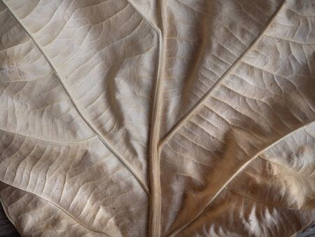 dried leaf: close up dried leaf texture