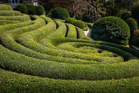 Buis cut in landscape garden in France