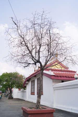 toter baum: Toter Baum in der N�he der Tempel in Bangkok Thailand