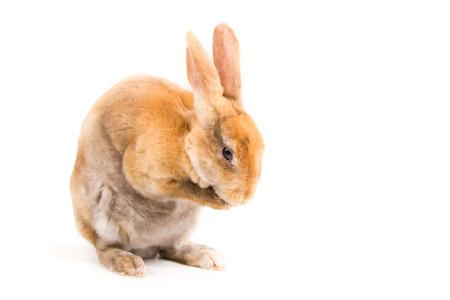 bugs bunny: rex rabbit,