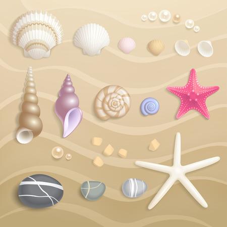 Alta Calidad colección Seashells