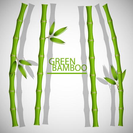 the frame: Bamboo frame.