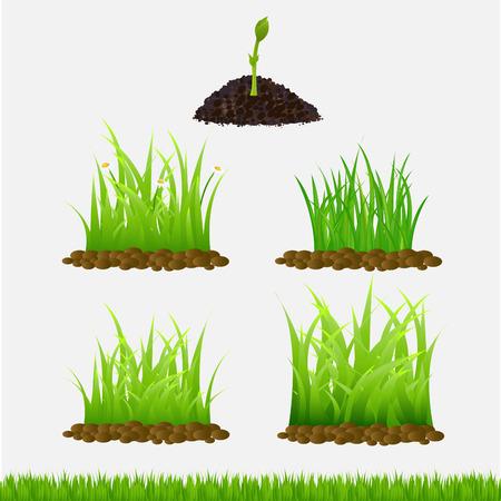 grass flowers: grass vector illustration