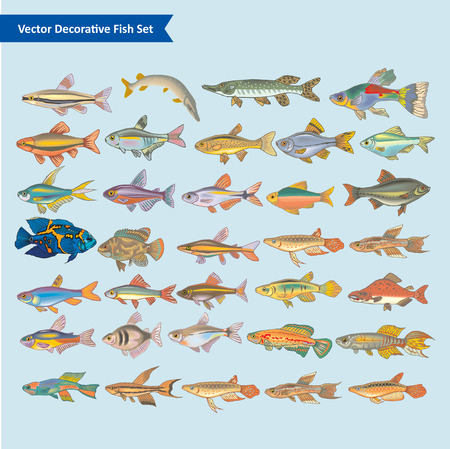 fish clipart: Fish Vector collection Illustration