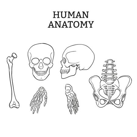 Human joints and bones vector set