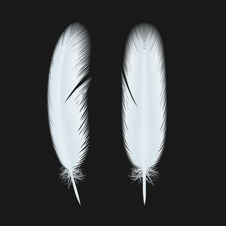 fluffy twirl feathers vector