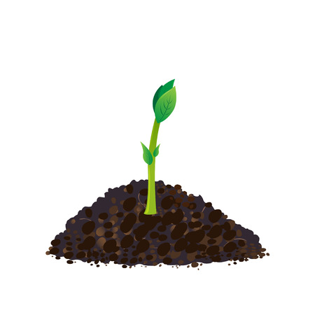 Seedling gardening plant Seeds, sprout in ground