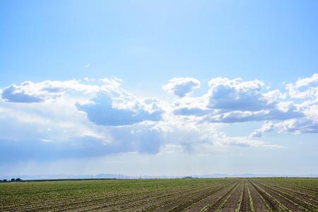 I am glad to take this amazing shot at the amazing California farm. Stock Photo