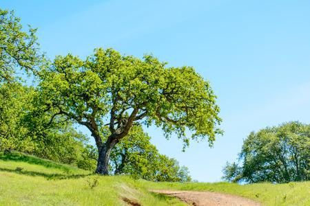 Grüner Baum und Wanderweg unter blauem Himmel im Frühsommer.