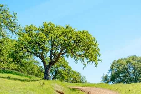 Green Tree and Hiking Trail Under Blue Sky in the Early Summer.