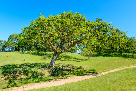iluminado a contraluz: Árbol verde y ruta de senderismo bajo el cielo azul en el comienzo del verano.