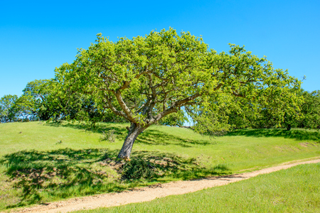 Green Tree and Hiking Trail Under Blue Sky in the Early Summer. Stock Photo