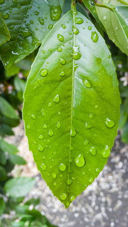 Green Close Up Leaf After Rain with Drop Banco de Imagens