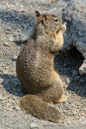 Closeup photos of Cute and Curious Squirrel Playing Outside Cave