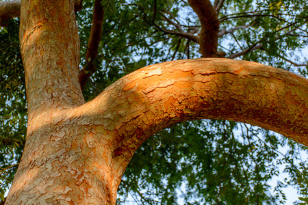 Close Up Tree Branch in Morning Golden Light with Bark Texture