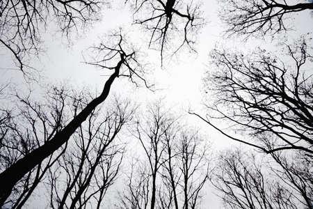 stand of leafless trees in silhoutte Zdjęcie Seryjne