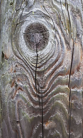 detail of electrical pole with knots