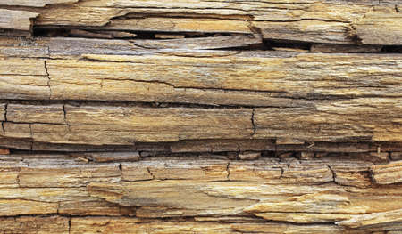 old wood trunk on beach