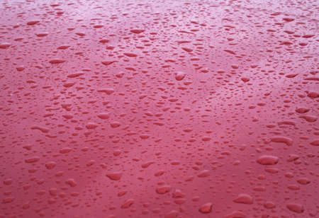 rain drops on red car hood