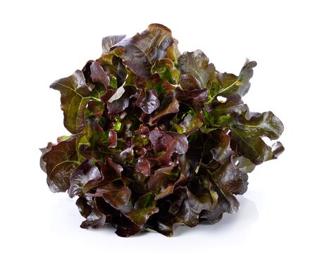 purple  lettuce  on white  ground