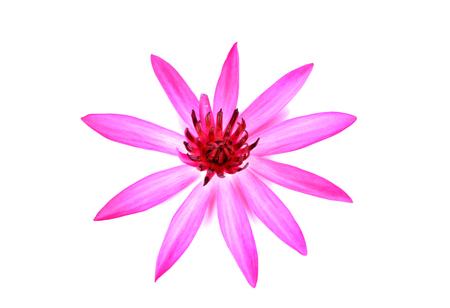 white back ground: lotus flower  on white back ground Stock Photo