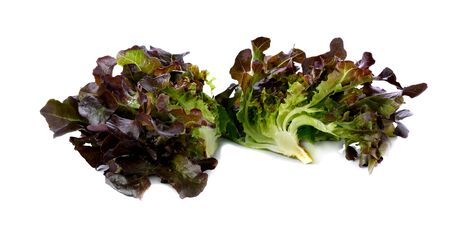 frilly: purple lettuce on the white background