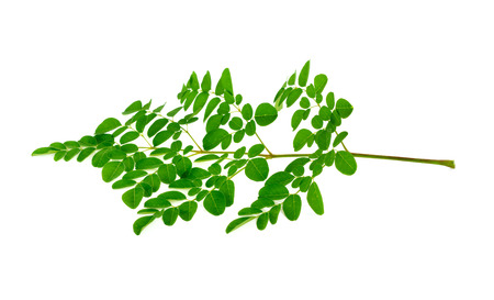 Fresh Moringa oleifera leaves isolated on white background