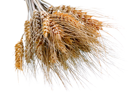 Barley Grains  Isolated on White Background