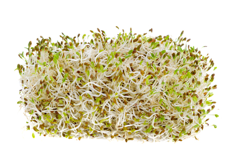 Sprouted alfalfa seeds isolated on a white background