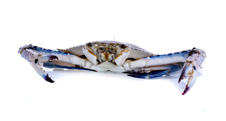 Blue Swimming Crabs isolated on white background Фото со стока