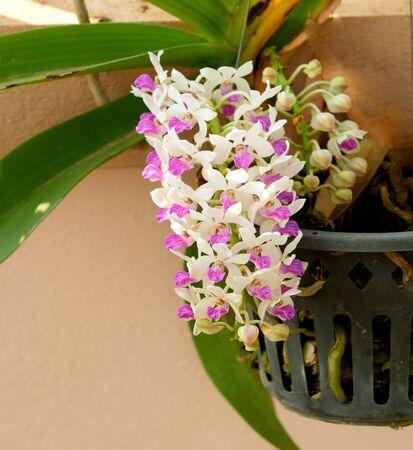 beautiful orchid flower in garden