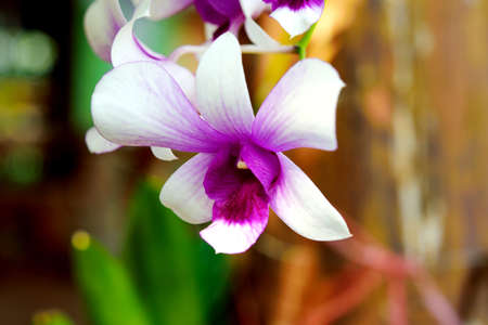 purple orchid blossom isolated in gagden Zdjęcie Seryjne