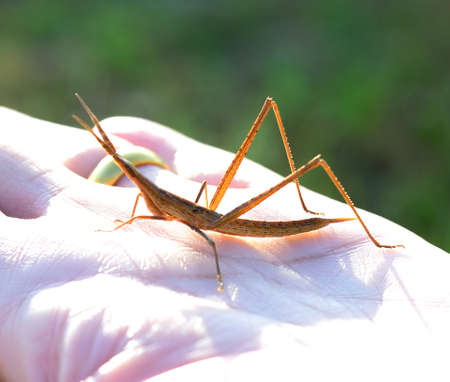 grasshopper on his hand Banque d'images