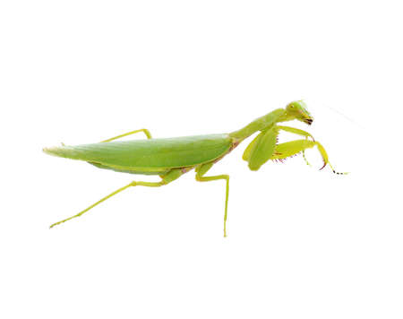 Grasshopper isolated on white background Banque d'images