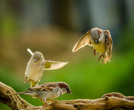 スズメの着陸