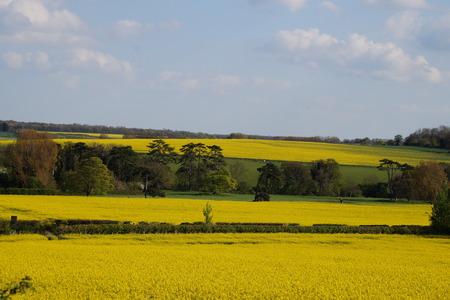 cropland: Yellow fields
