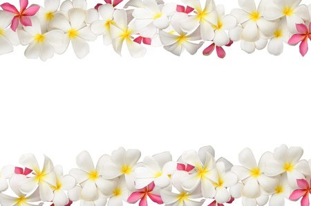 Frangipani flower Boder photo