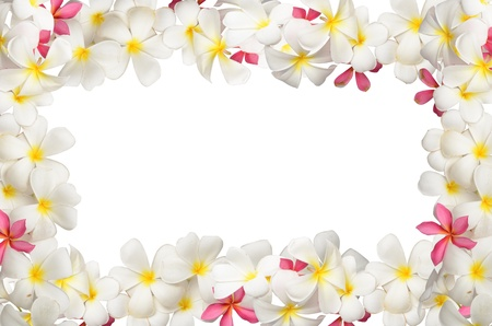 Frangipani flower Boder Stock Photo