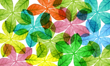 Clolorful leaf Background