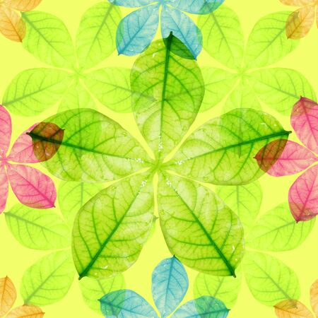 Seamless colorful  leaves photo