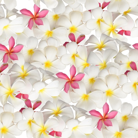 White flower seamless Stock Photo - 9940347