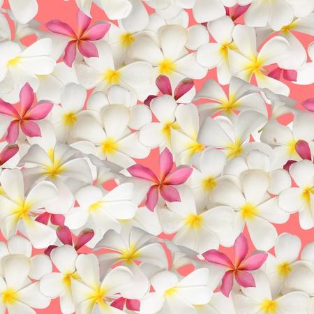 White flower seamless