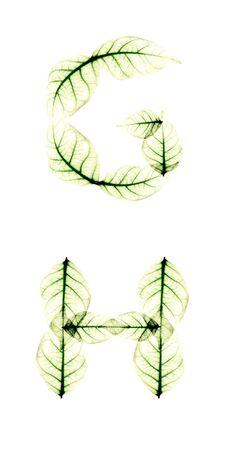 g alphabet: Leaf Alphabet letter G H