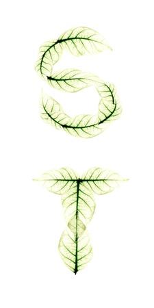 Leaf Alphabet letter ST Stock Photo - 10115528